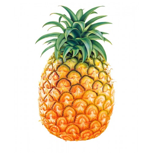 ANANAS EXTRA SWEET 1,500 kg